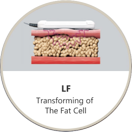 Transforming of The Fat Cell